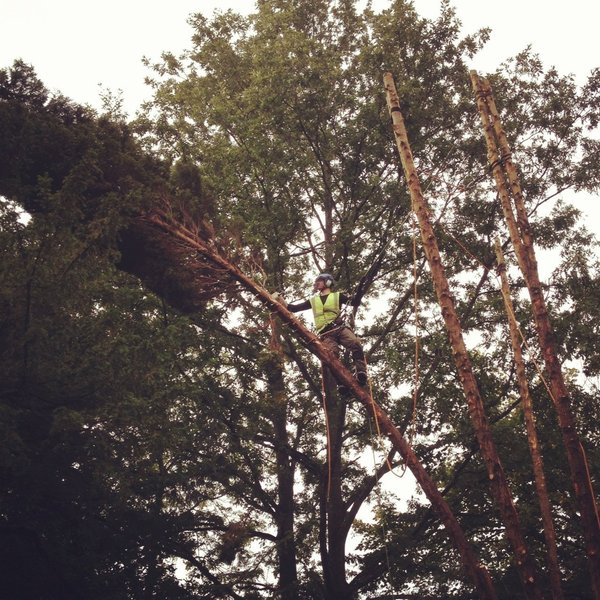 Greyhound tree garden services tree surgeons in for Tree and garden services