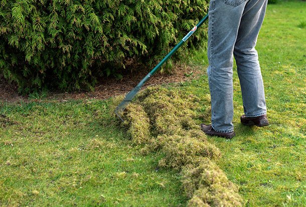 how to look after laid lawn