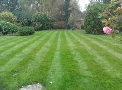 Primary thumb attenlawn