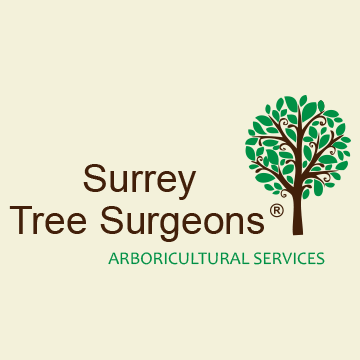 Gallery large surrey tree surgeons arb services facebook logo 360x360 ariel