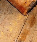 Square thumb active woodworm