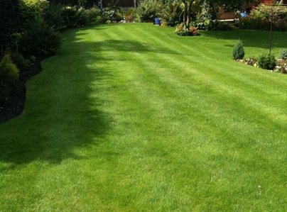 Primary thumb lawn 1 600 800 75 s