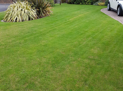 Primary thumb lawn after aeration
