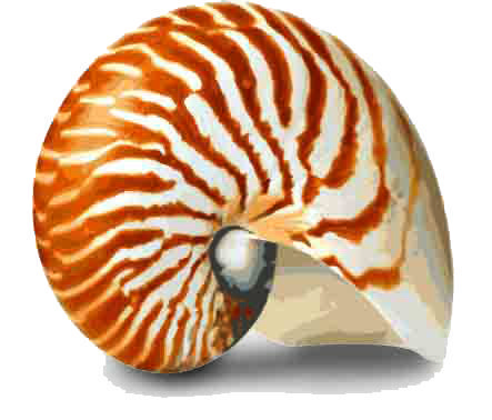 Gallery large shell no background master